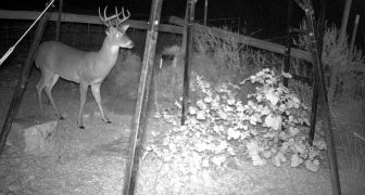 How to Use Trail Camera's for Home Security Purposes